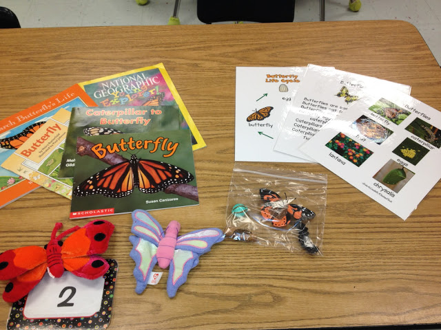 Buggy Discovery Bags (compare insects) - Top 20 Kindergarten Teaching Ideas to Try Right Now