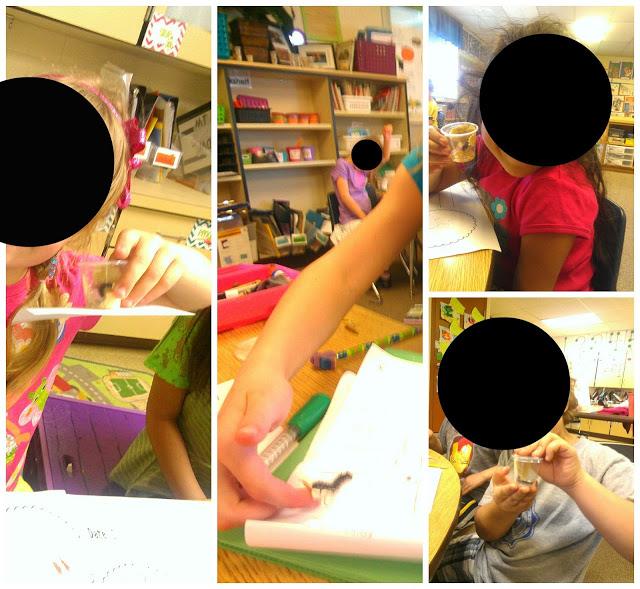 KindergartenWorks: investigating painted lady butterflies in kindergarten
