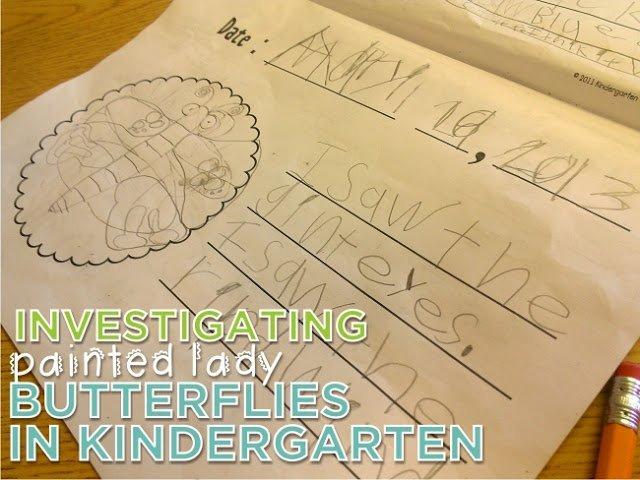 Investigating Painted Lady Butterflies in Kindergarten