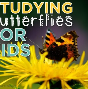 studying butterflies for kids
