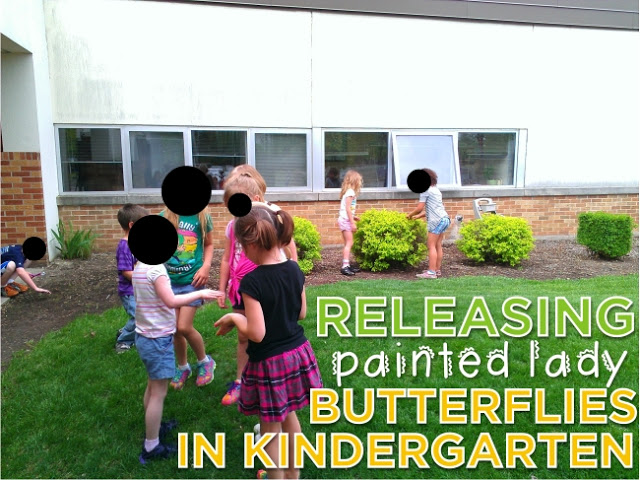 releasing painted lady butterflies in kindergarten