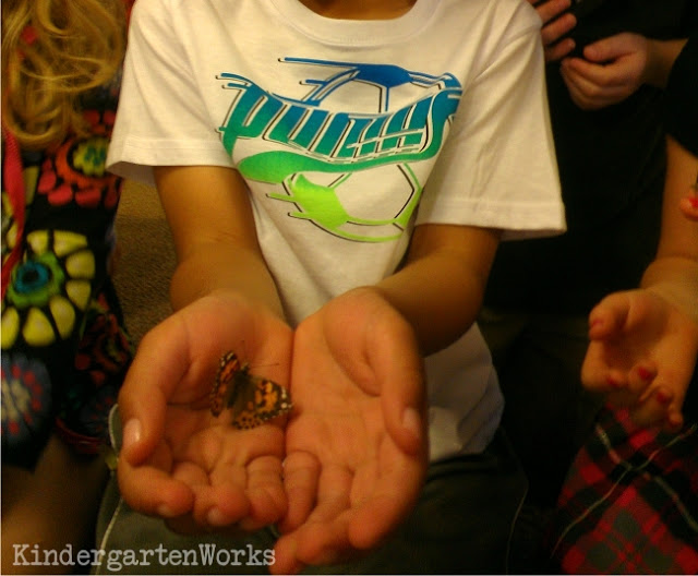 How to Do a Painted Lady Butterfly Unit in Kindergarten