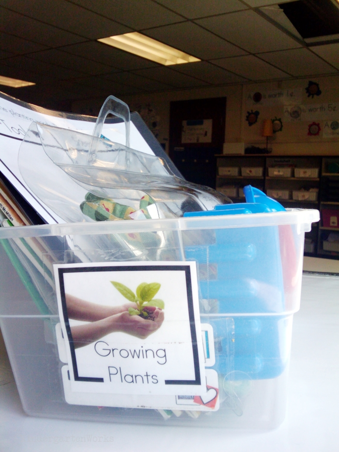 Non-Fiction Literacy Center for Kindergarten - growing plants theme