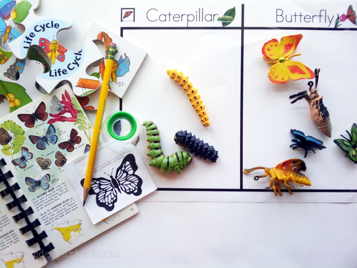 Non-Fiction Literacy Center for Kindergarten - sorting butterfly objects