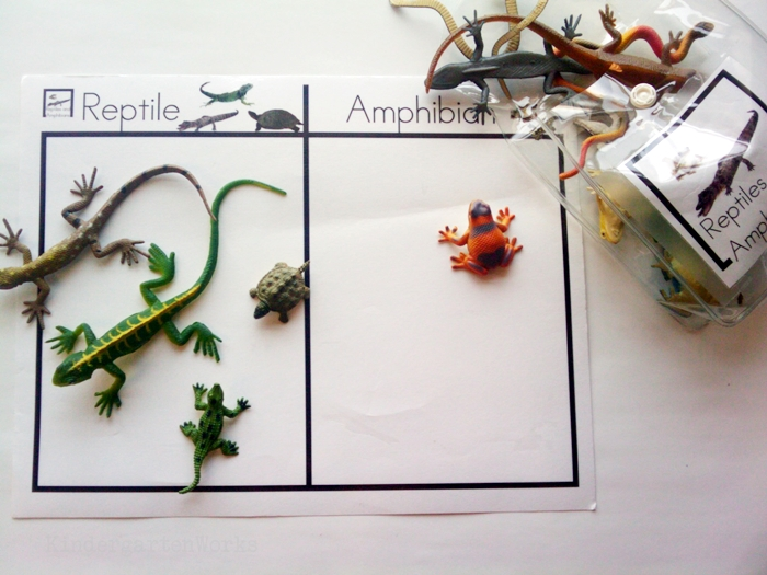 Non-Fiction Literacy Center for Kindergarten - sorting reptile and amphibians