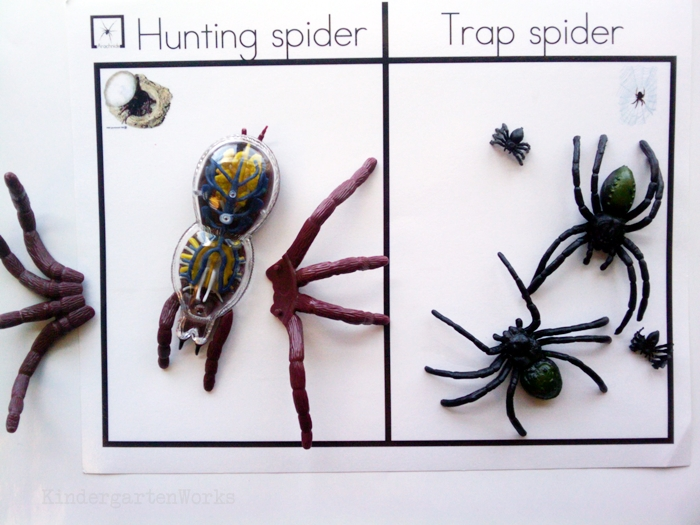 Non-Fiction Literacy Center for Kindergarten - sorting spiders activity mat