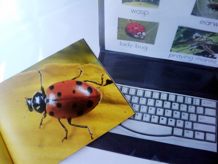 Non-Fiction Literacy Center for Kindergarten - typing insect vocabulary words