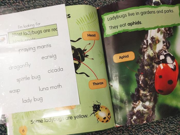 kindergarten literacy center activity - bugs - non fiction theme