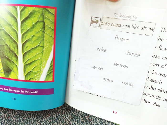 kindergarten literacy center activity - growing plants - non fiction theme